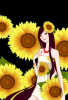 doll sunflowers