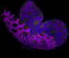 purple buterfly