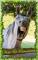 Horse Sense ~ Vote & Comment