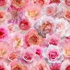 seamless pink roses love spring background