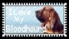 I love my Bloodhound