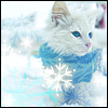 cute winter kitty