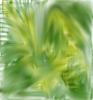 Green Sprig Flow