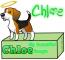Chloe, Makani's Beagle