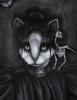 Victorian Goth Cat