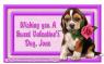 Valentine's Day Puppy - Jane