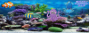Under the sea FB Cover