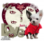 Happy Valentine's Day Chihuahua - Jane