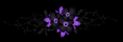 Dark purple flower divider