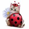 Ladybug Cat