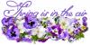 Spring is in the air, Flowers, Seasons