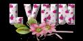 Pink Flowers - Lynn