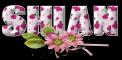 Pink Flowers - Shian