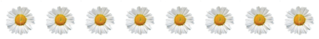Daisy Chain divider, FLOWERS, NATURE, DAISY