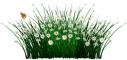 LONG GRASS DIVIDER