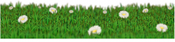 Grass divider with daisies