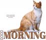 GOOD MORNING, ANIMALS, CAT, GREETINGS