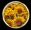 Sunflower Brad - Jessi