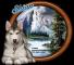 Wolf - Shian