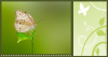 GREEN BACKGROUND WITH BUTTERFLY & SIDE PANEL WITH VINES