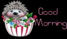 Hedgehog - Good Morning