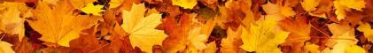 Divider of Autumn Leaves