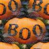 Halloween 'BOO' Pumpkins
